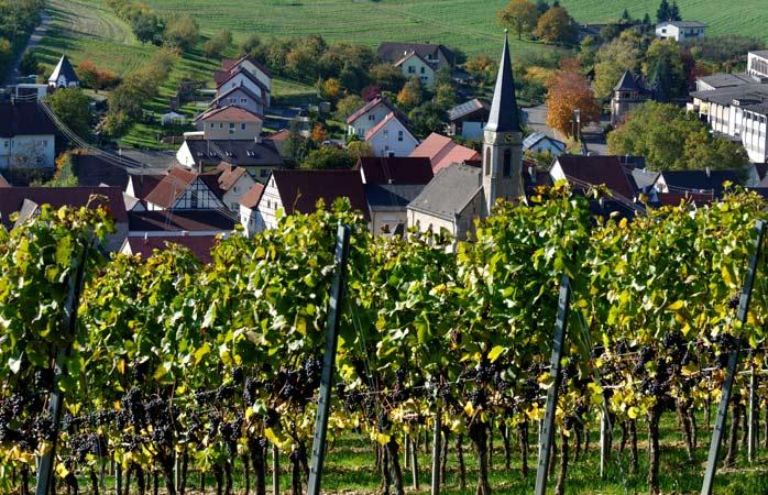 Passeie por entre os diversos vinhedos de Lauda-Königshofen