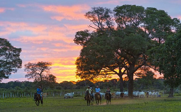 Turismo no Pantanal: guia de destinos e atividades imperdíveis nesse paraíso