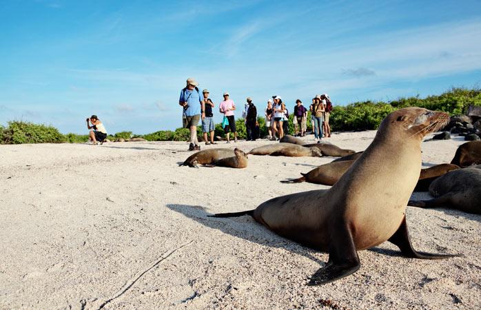 Mais um dia visitando e fotografando os leões marinhos de Floreana