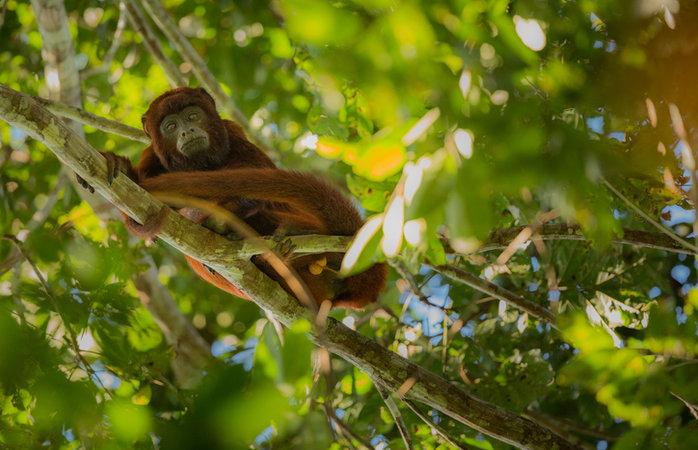Turismo na Amazônia - tour pela floresta