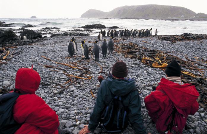 O irresistível passatempo de assistir mais de 850.000 de Pinguins Reais cruzando a costa da Ilha Macquarie