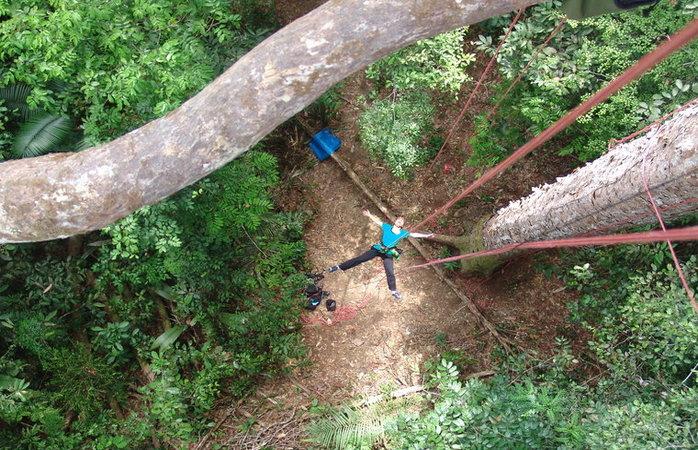 Turismo na Amazônia - Tree Climbing
