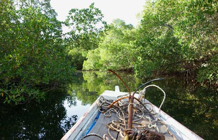 Uma passeio de piroga para descobrir a fauna escondida nos manguezais do delta do rio Saloum