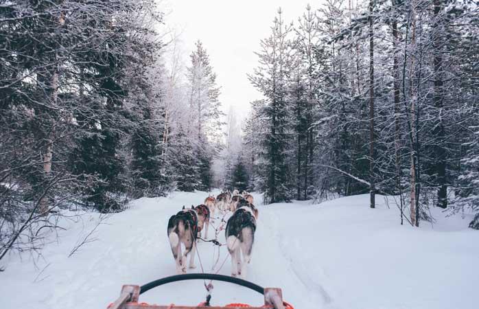 Deslizando todo o caminho num trenó puxado a Huskies na Lapônia finlandesa